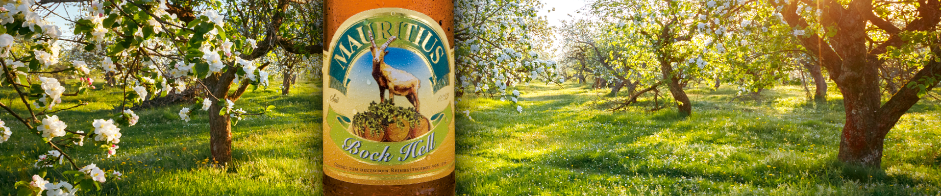 Mauritius: Biere: Bock Hell