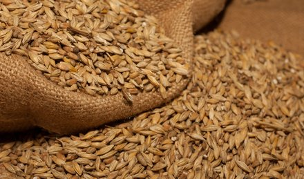 Mauritius: Brauerei: Rohstoffe: Gerste